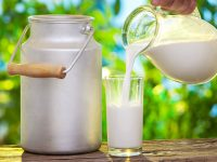 sarımsaklı süt